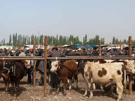 The bustling Kashgar livestock market
