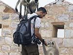 Travis feeding a barrel of Langur monkeys mango skins