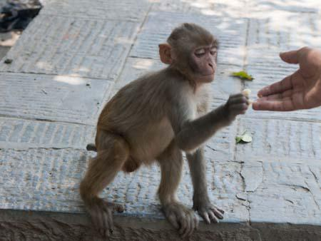 Travis feeding a smaller monkey some banana