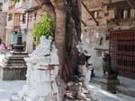 A chaitya has been completely shattered by a bodhi tree
